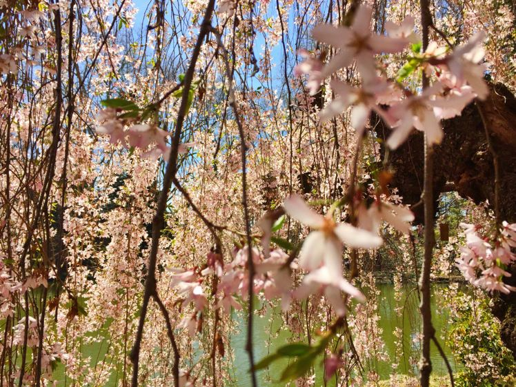 Brooklyn Botanical Garden10