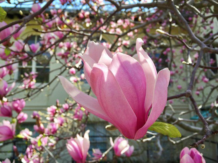 Brooklyn Botanical Garden7
