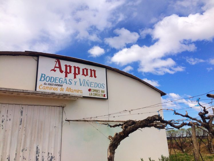Appon Vineyard3