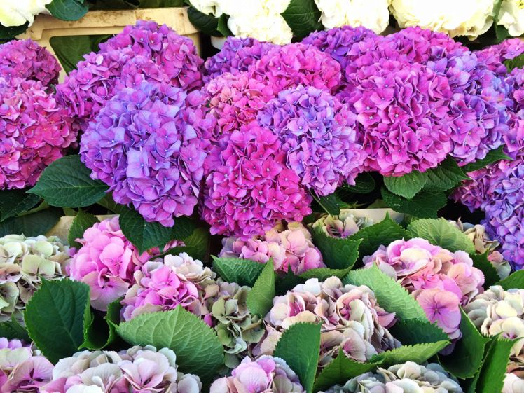 Columbia Road Flower Market1
