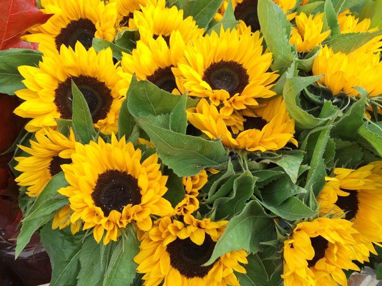 Columbia Road Flower Market12