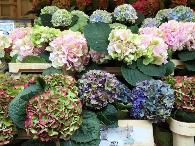 Columbia Road Flower Market13