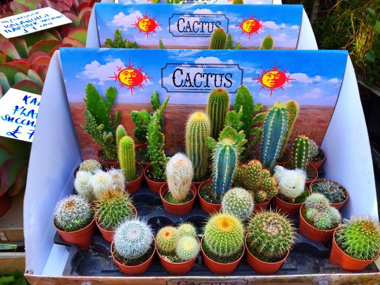 Columbia Road Flower Market7
