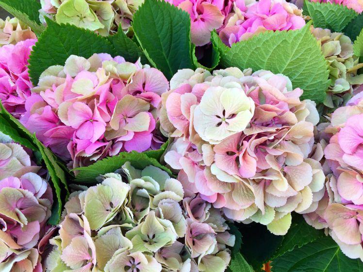 Columbia Road Flower Market9