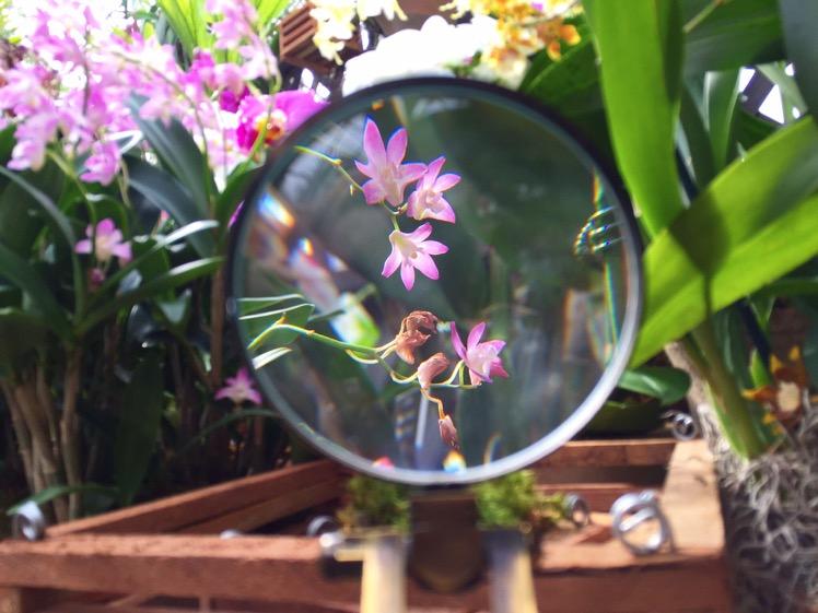 nybg-orchidelirium1