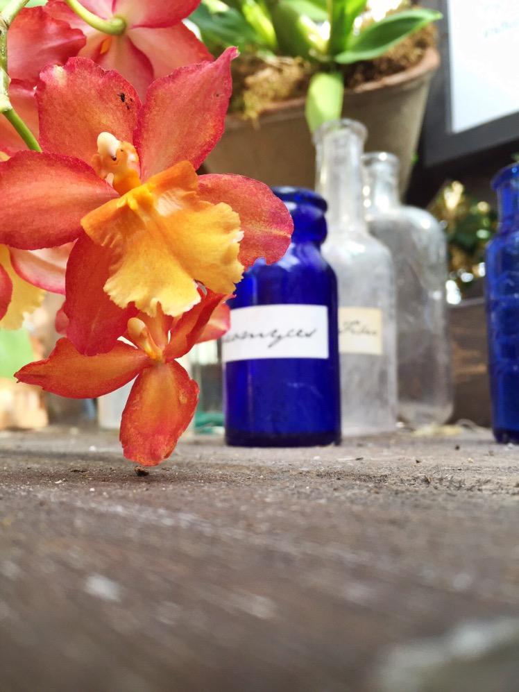nybg-orchidelirium10