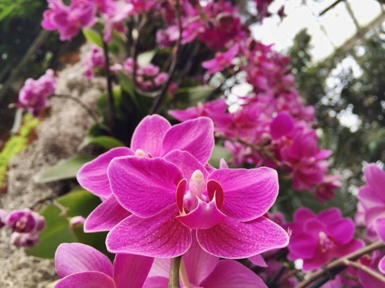 nybg-orchidelirium11