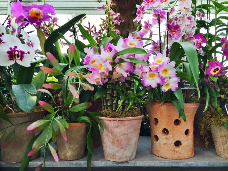 nybg-orchidelirium13