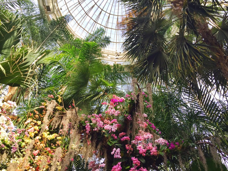 nybg-orchidelirium2