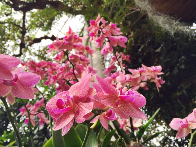 nybg-orchidelirium4