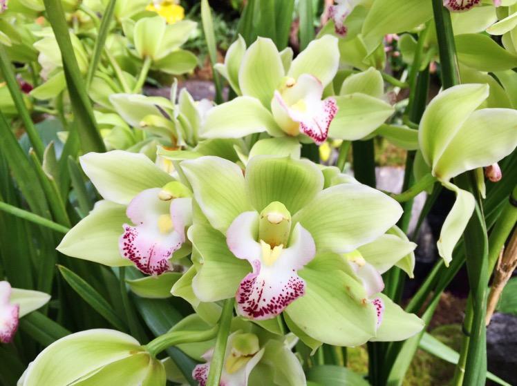nybg-orchidelirium7